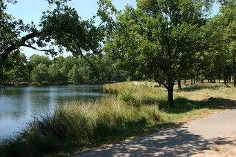 omgeving Dwingelo